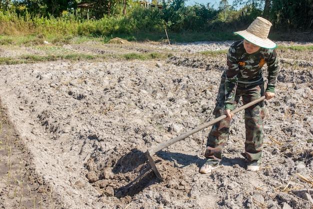 Gärtnerfrau, die hacke hält gemüsegarten für die pflanzung von süßkartoffeln Premium Fotos