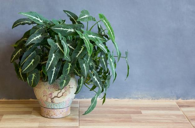 Garten topfpflanze auf dem boden in einem raum Premium Fotos