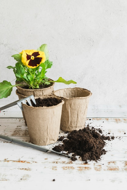 Gartengeräte mit torftöpfen und erde zum pflanzen der gelben stiefmütterchenpflanze Kostenlose Fotos