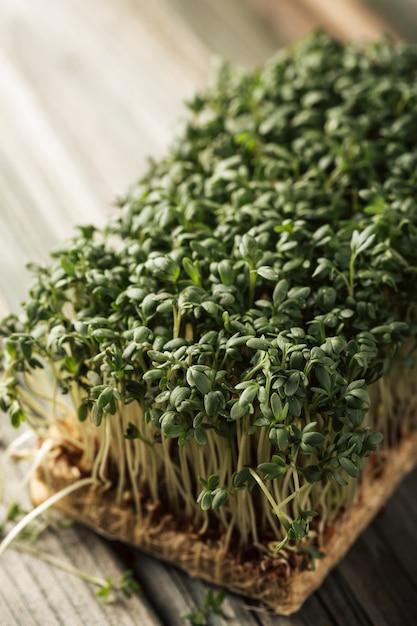 Gartenkresse, junge pflanzen. Premium Fotos