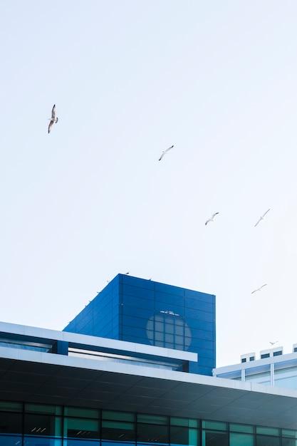 Gebäude mit vögeln Kostenlose Fotos