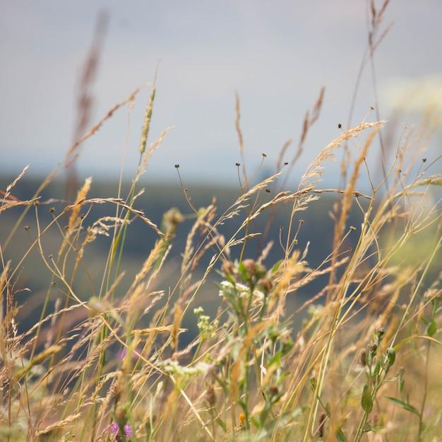 Gebirgsgras und wilde blumen Premium Fotos