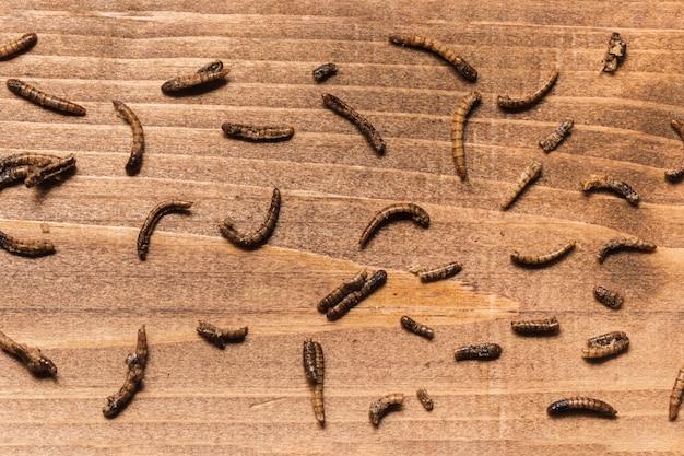 Gebratene würmer auf draufsicht des hölzernen brettes Kostenlose Fotos