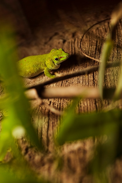 Gecko Kostenlose Fotos