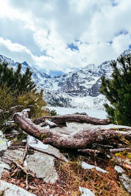 Gefallener baum mit schneebedeckter landschaft Kostenlose Fotos