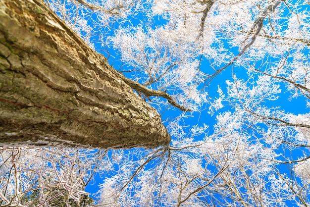 gefrorene b ume im winter mit blauem himmel download der kostenlosen fotos. Black Bedroom Furniture Sets. Home Design Ideas