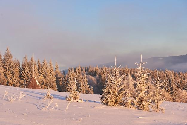 Geheimnisvolle winterlandschaft majestätische berge im winter. magischer schneebedeckter winterbaum. karpaten. ukraine Kostenlose Fotos