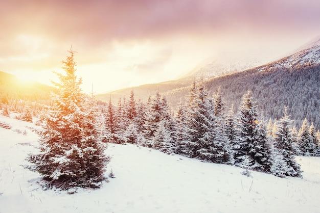 Geheimnisvolle winterlandschaft mit nebel, majestätische berge Premium Fotos