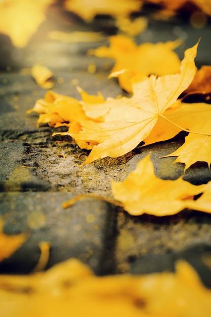 Gelbblätter auf dem groung im park Premium Fotos