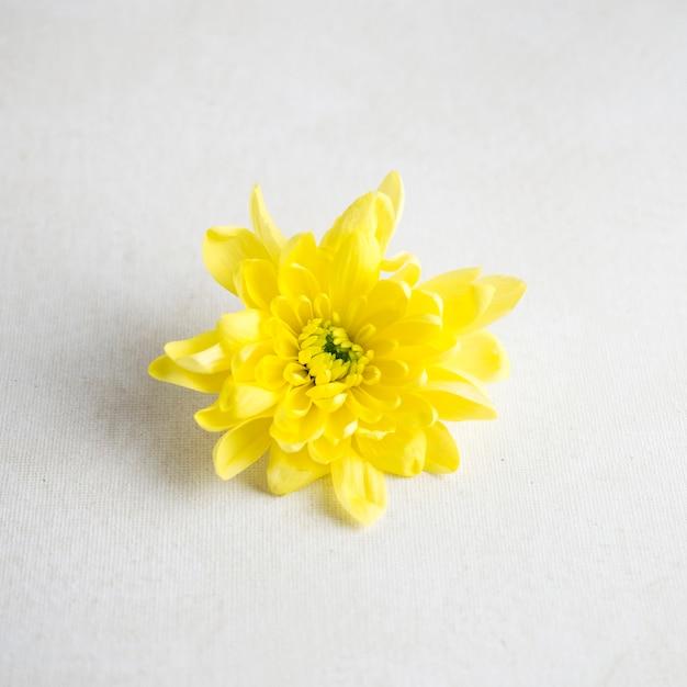 Gelbe blume auf weißer tabelle Kostenlose Fotos