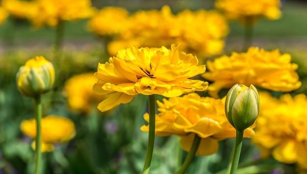 Gelbe blumen im garten Kostenlose Fotos