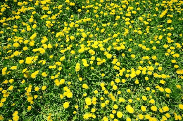 Gelbe blumen sehen oben aus Kostenlose Fotos