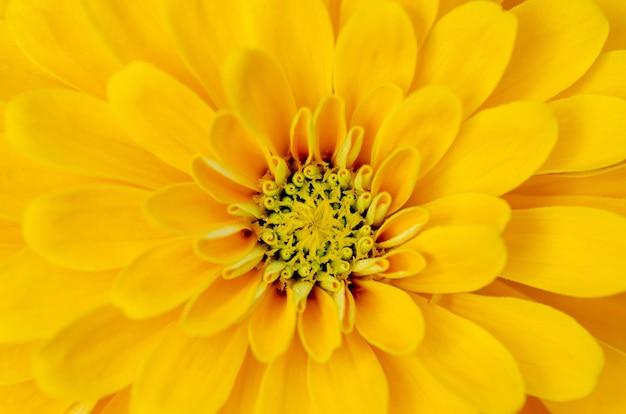Gelbe blumenblumenblätter mit einem unscharfen hintergrundmuster. Premium Fotos
