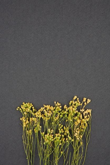 Gelbe getrocknete blumen auf grauem hintergrund Premium Fotos