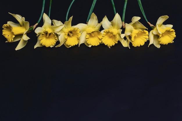 Gelbe narzissenblumen auf dunklem hintergrund Premium Fotos