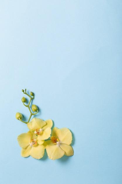 Gelbe orchideen auf blauem papier Premium Fotos