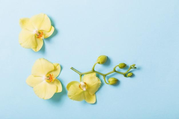 Gelbe orchideen auf blauem papierhintergrund Premium Fotos