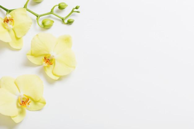 Gelbe orchideenblüten Premium Fotos