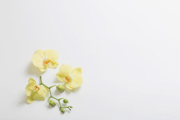Gelbe orchideenblumen auf weißem hintergrund Premium Fotos