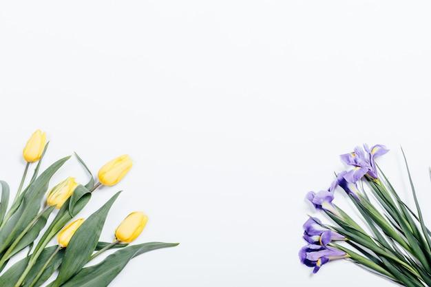 Gelbe tulpen und purpurrote iris auf einer weißen oberfläche, draufsicht Premium Fotos