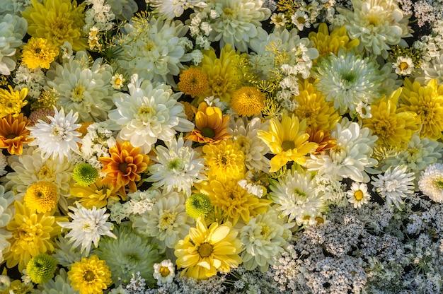 Gelbe und weiße chrysanthemenblumen Premium Fotos