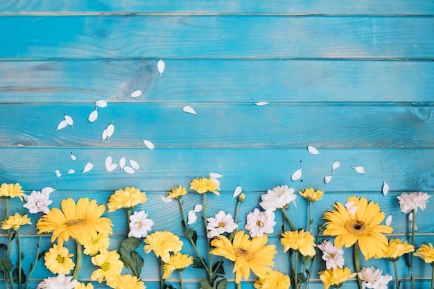 Gelbe und weiße kleine blumen Kostenlose Fotos