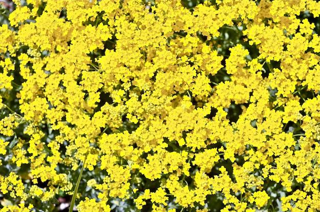 Gelber blühender hintergrund Kostenlose Fotos