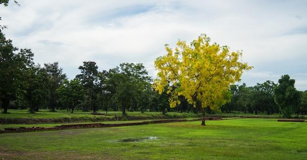 Gelber einsamer baum im park Premium Fotos