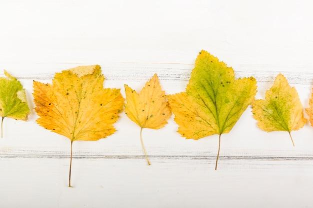 Gelber herbstlaub der draufsicht Kostenlose Fotos