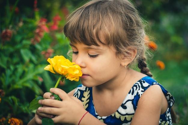 Gelber rosafarbener junger gärtner Premium Fotos