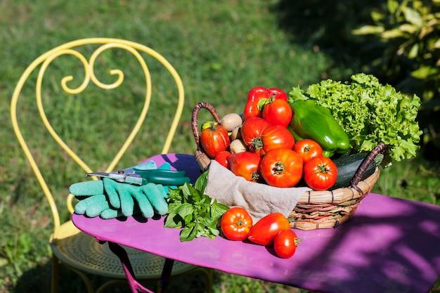 Gemüse in einem garten unter dem sonnenlicht Kostenlose Fotos