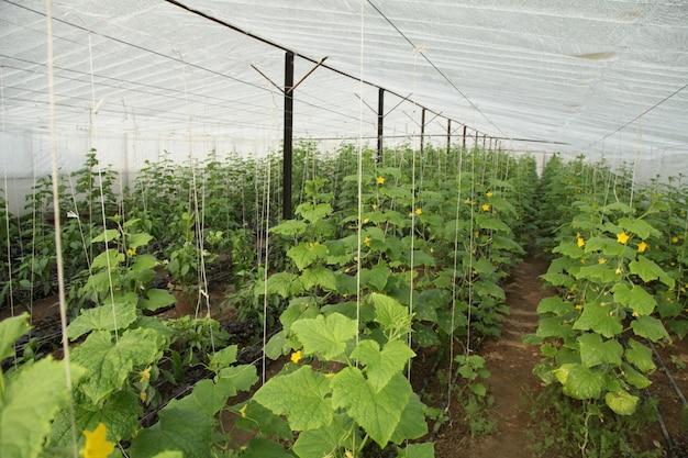 Gemüseplantage in einem gewächshaus Kostenlose Fotos