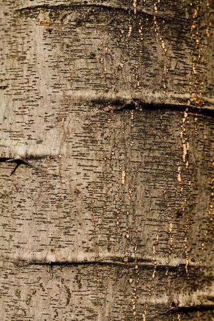 Geprägte beschaffenheit der barke der eichenahaufnahme Kostenlose Fotos