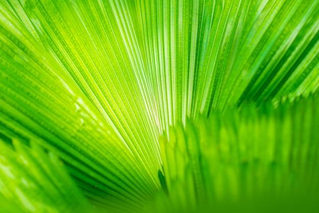 Geraden muster von frischen grünen blättern Premium Fotos