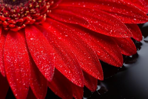 Gerberablumenblumenblätter der nahaufnahme Kostenlose Fotos