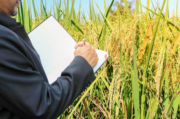 Geschäftsmannleute und reisfelder goldgelb, landwirtschaftliche produkte Premium Fotos
