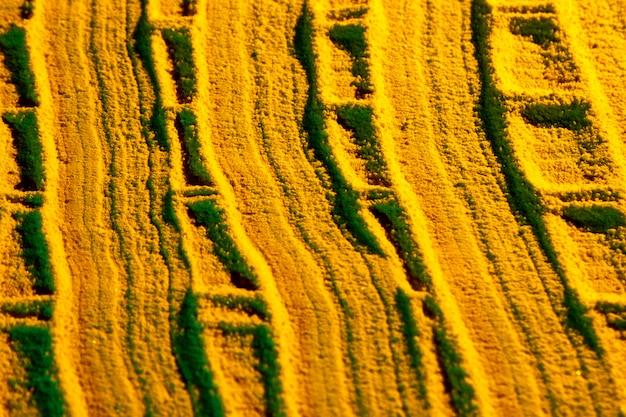 Geschwungene linien aus gelbem sand Kostenlose Fotos
