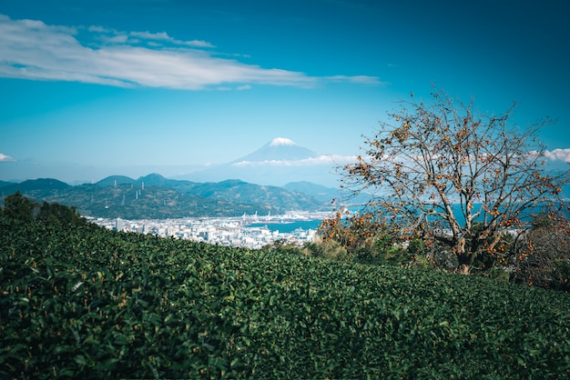 Gestalten sie bild des berges fuji mit feld des grünen tees tagsüber in shizuoka, japan landschaftlich. Premium Fotos