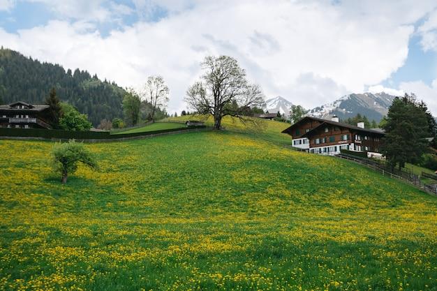 Gestalten sie tal mit viel löwenzahn auf schweizer gebirgshintergrund landschaftlich Kostenlose Fotos