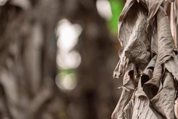 Getrocknete banane verlässt hintergrund. Kostenlose Fotos
