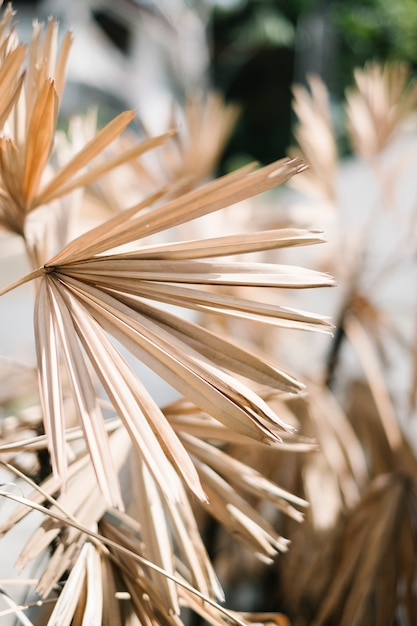 Getrocknete blattpflanze Kostenlose Fotos