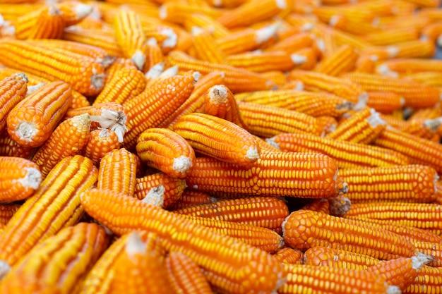 Getrockneter maishintergrund. Kostenlose Fotos
