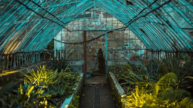 gew chshaus mit botanischen pflanzen download der kostenlosen fotos