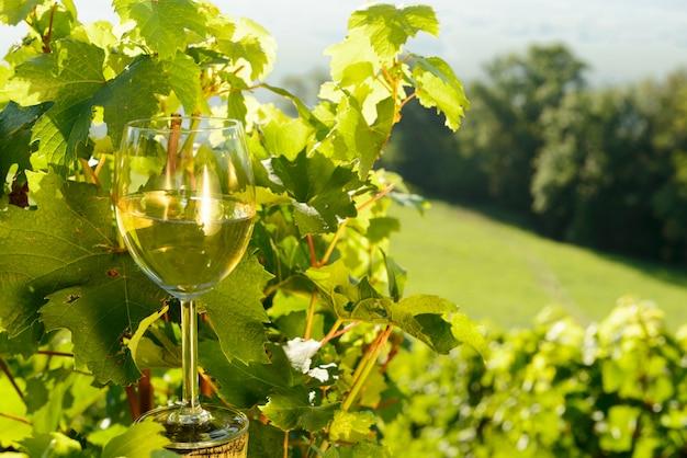 Glas weißwein im weinberg Premium Fotos