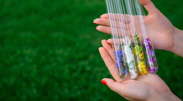 Glasröhrchen mit mehrfarbigen blütenblättern in frauenhänden, für parfums, sammelpflanzen Premium Fotos