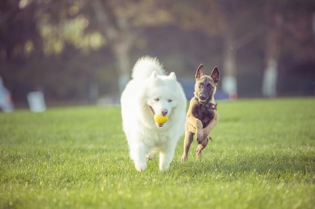 Glückliche haustierhunde spielen auf gras Kostenlose Fotos