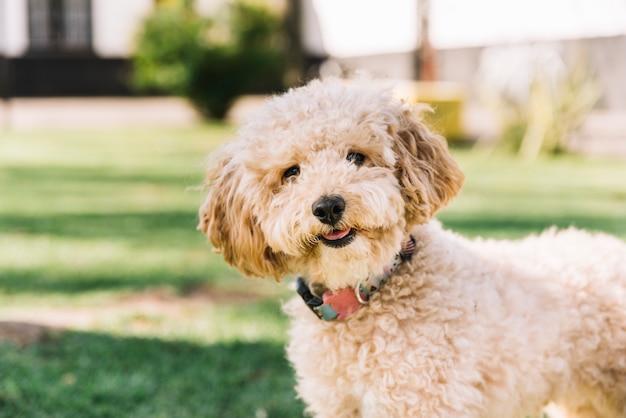 Glücklicher hund, der spaß im park hat Kostenlose Fotos