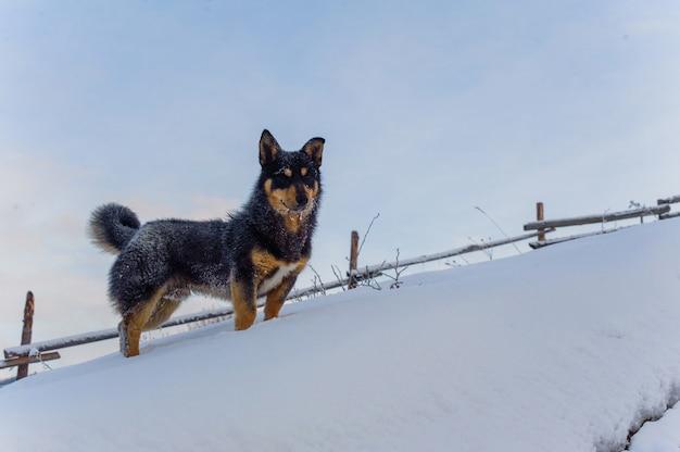 Glücklicher welpe im winter Premium Fotos