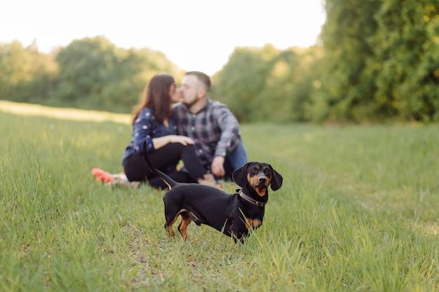 Glückliches junges kaukasisches paar saß auf parkrasen mit welpenwursthundehaustier an einem sonnigen tag Kostenlose Fotos