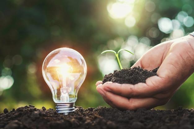Glühlampe auf dem boden und hand, die kleinen baum halten Premium Fotos